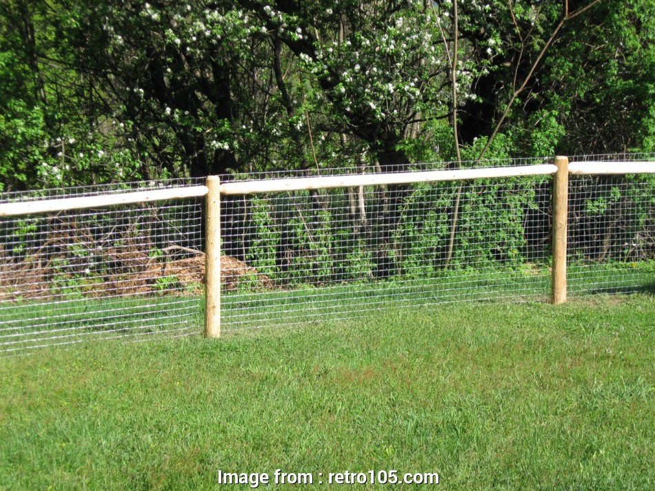 farm fence wire mesh Home Depot Fencing Both, Fence Fence, Marvelous Best, Fences Wire, Fence Farm Wire Fence Wire Mesh Fence Wire Farm Fence Wire Mesh Most Home Depot Fencing Both, Fence Fence, Marvelous Best, Fences Wire, Fence Farm Wire Fence Wire Mesh Fence Wire Photos