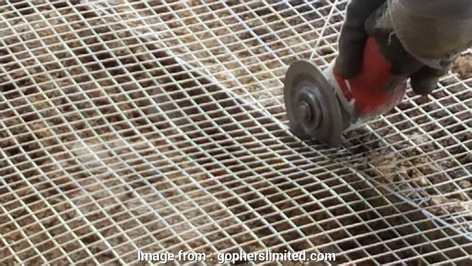 gophers limited stainless steel wire mesh Gophers Limited Non-Toxic Humane Pest Control Santa Cruz CA-Home Page 17 Cleaver Gophers Limited Stainless Steel Wire Mesh Images