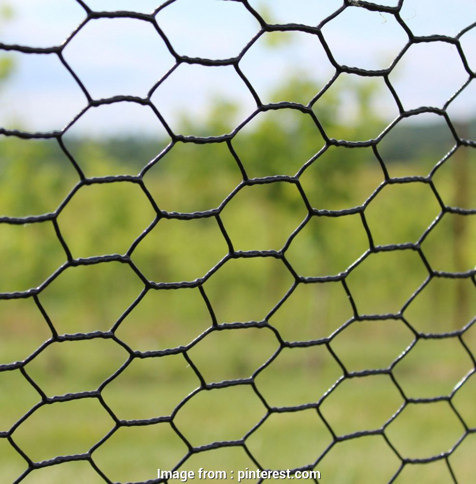 stainless steel hex wire mesh Hexagonal Wire Mesh Netting/Chicken Mesh: Assortments Available 1. Hot-dipped galvanized after weaving 2. Hot-dipped galvanized before weaving 3 Stainless Steel, Wire Mesh Fantastic Hexagonal Wire Mesh Netting/Chicken Mesh: Assortments Available 1. Hot-Dipped Galvanized After Weaving 2. Hot-Dipped Galvanized Before Weaving 3 Solutions