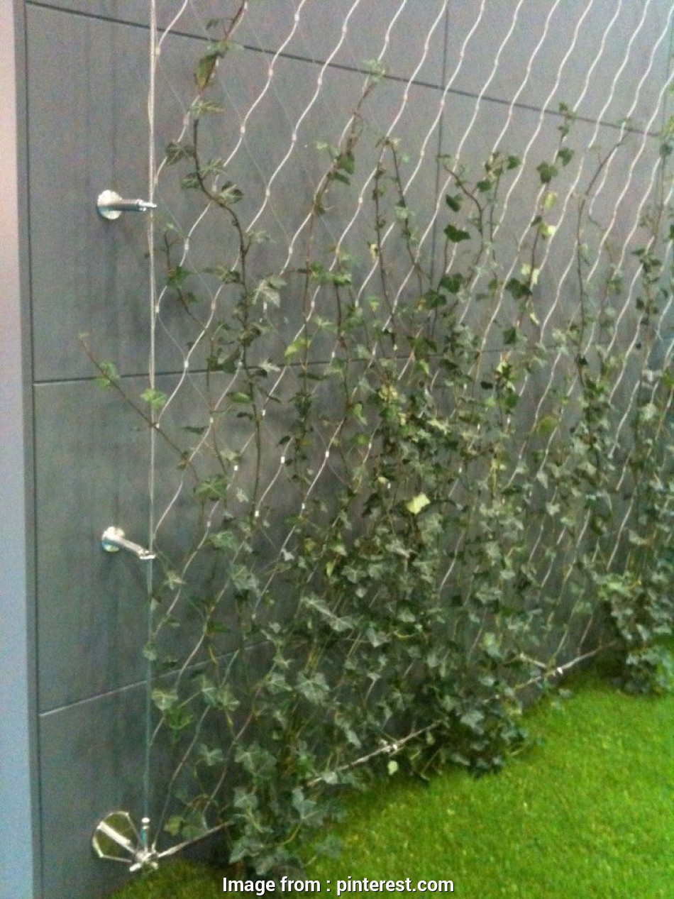 stainless steel wire mesh trellis Stainless steel wire used to support climbers, green wall 14 Fantastic Stainless Steel Wire Mesh Trellis Galleries