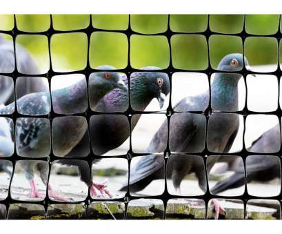 bird screen wire mesh size Bird-X, ft. x 14, Standard Bird Netting Bird Screen Wire Mesh Size Fantastic Bird-X, Ft. X 14, Standard Bird Netting Images