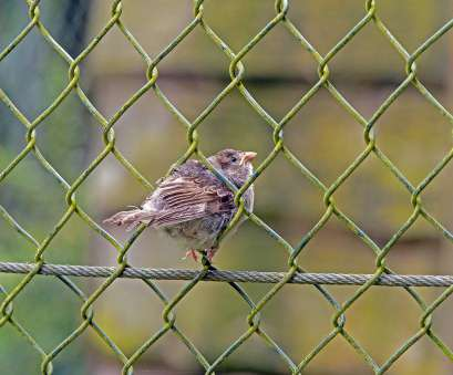 bird wire mesh Young sparrow,wire mesh fence,sperling,sparrow, free photo from Bird Wire Mesh Practical Young Sparrow,Wire Mesh Fence,Sperling,Sparrow, Free Photo From Galleries