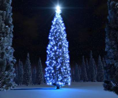 blue christmas lights on white wire Extraordinary image of very tall winter outdoor amber Christmas tree lights, Christmas Blue Christmas Lights On White Wire Popular Extraordinary Image Of Very Tall Winter Outdoor Amber Christmas Tree Lights, Christmas Solutions