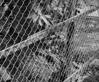 diamond mesh wire fence BLACK, WHITE PHOTO OF CHAIN-LINK FENCE (ALSO REFERRED TO AS WIRE NETTING Diamond Mesh Wire Fence Top BLACK, WHITE PHOTO OF CHAIN-LINK FENCE (ALSO REFERRED TO AS WIRE NETTING Photos