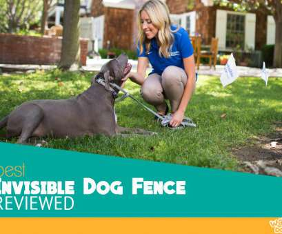 electric dog fence wireless vs wired Best Invisible, Fence, 2018, In Ground, Wireless Compared Electric, Fence Wireless Vs Wired Practical Best Invisible, Fence, 2018, In Ground, Wireless Compared Photos