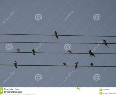 electrical wire size europe Swallows, sitting on, electrical wire, blue, background. Small birds resting Electrical Wire Size Europe Creative Swallows, Sitting On, Electrical Wire, Blue, Background. Small Birds Resting Solutions