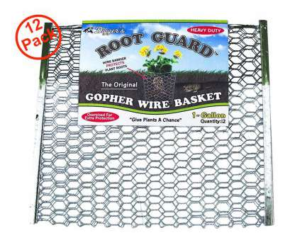 gophers limited stainless steel wire mesh Amazon.com : Digger's Root Guard Original Gopher 1 gal. Wire Basket, 12 Baskets (1 gal) : Garden & Outdoor Gophers Limited Stainless Steel Wire Mesh Nice Amazon.Com : Digger'S Root Guard Original Gopher 1 Gal. Wire Basket, 12 Baskets (1 Gal) : Garden & Outdoor Solutions