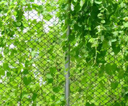 green wire mesh fence green, plant on wire mesh of fence Stock Photo, 84960928 Green Wire Mesh Fence Practical Green, Plant On Wire Mesh Of Fence Stock Photo, 84960928 Photos
