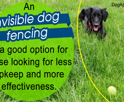 petsafe stubborn dog electric fence without wire Read This Review, Invisible Fences Before, Install One Petsafe Stubborn, Electric Fence Without Wire Best Read This Review, Invisible Fences Before, Install One Collections
