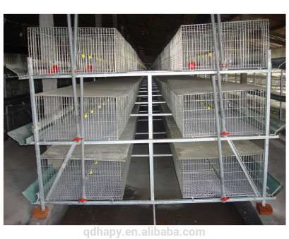 stainless steel wire mesh cages Wire Mesh Broiler Cage Wholesale, Cage Suppliers, Alibaba Stainless Steel Wire Mesh Cages Popular Wire Mesh Broiler Cage Wholesale, Cage Suppliers, Alibaba Photos