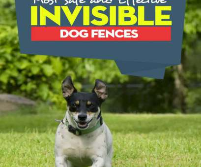 stubborn no wire dog electric fence Top 10 Best Invisible, Fence, Dogs Safe Containment (2018) Stubborn No Wire, Electric Fence Brilliant Top 10 Best Invisible, Fence, Dogs Safe Containment (2018) Galleries