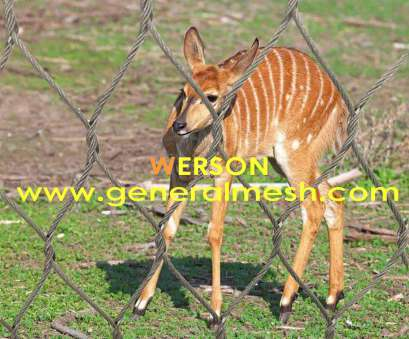 werson wire mesh fence ltd zoo mesh ,Animal Enclosures,Aviary Enclosures WEBNET Wire Mesh,Animal Enclosures WEBNET Wire Werson Wire Mesh Fence Ltd Simple Zoo Mesh ,Animal Enclosures,Aviary Enclosures WEBNET Wire Mesh,Animal Enclosures WEBNET Wire Solutions