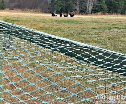 wire mesh fence for backyard Best Uses: To protect small plants, to fence in a garden, cover, top of a, run Wire Mesh Fence, Backyard Fantastic Best Uses: To Protect Small Plants, To Fence In A Garden, Cover, Top Of A, Run Ideas