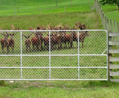 Wire Mesh Fence Nz Perfect Stags At Raincliff Station Photos