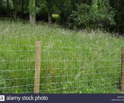 wire mesh fence uk Wire mesh garden stock fence with timber wooden posts uprights with tall meadow grasses behind on sloping site England UK Wire Mesh Fence Uk Top Wire Mesh Garden Stock Fence With Timber Wooden Posts Uprights With Tall Meadow Grasses Behind On Sloping Site England UK Galleries