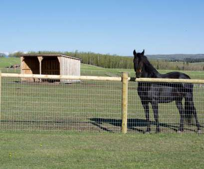 wire mesh fencing for horses While safeguarding horses, it is very important to, them in secure area where they Wire Mesh Fencing, Horses Top While Safeguarding Horses, It Is Very Important To, Them In Secure Area Where They Collections