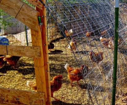 wire mesh panels chicken run Cricket Song Farm: Cattle Panels make a sturdy Chicken Run/ Hoop Coop Wire Mesh Panels Chicken Run Simple Cricket Song Farm: Cattle Panels Make A Sturdy Chicken Run/ Hoop Coop Solutions