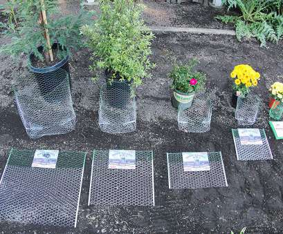 wire mesh planting baskets Amazon.com, Rodent/Gopher Plant, Root Guard 15 Gallon Size Baskets Diggers : Garden & Outdoor Wire Mesh Planting Baskets Simple Amazon.Com, Rodent/Gopher Plant, Root Guard 15 Gallon Size Baskets Diggers : Garden & Outdoor Collections