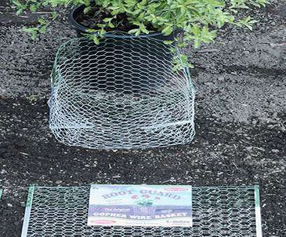 wire mesh planting baskets Amazon.com, Rodent/Gopher Plant, Root Guard 15 Gallon Size Baskets Diggers : Garden & Outdoor Wire Mesh Planting Baskets New Amazon.Com, Rodent/Gopher Plant, Root Guard 15 Gallon Size Baskets Diggers : Garden & Outdoor Galleries