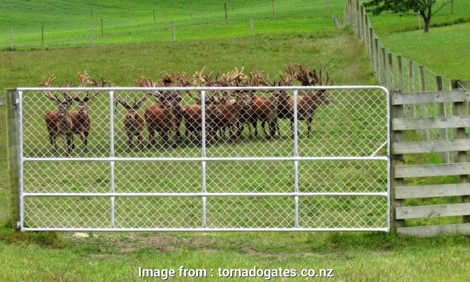 wire mesh fence nz Stags at Raincliff Station Wire Mesh Fence Nz Perfect Stags At Raincliff Station Photos