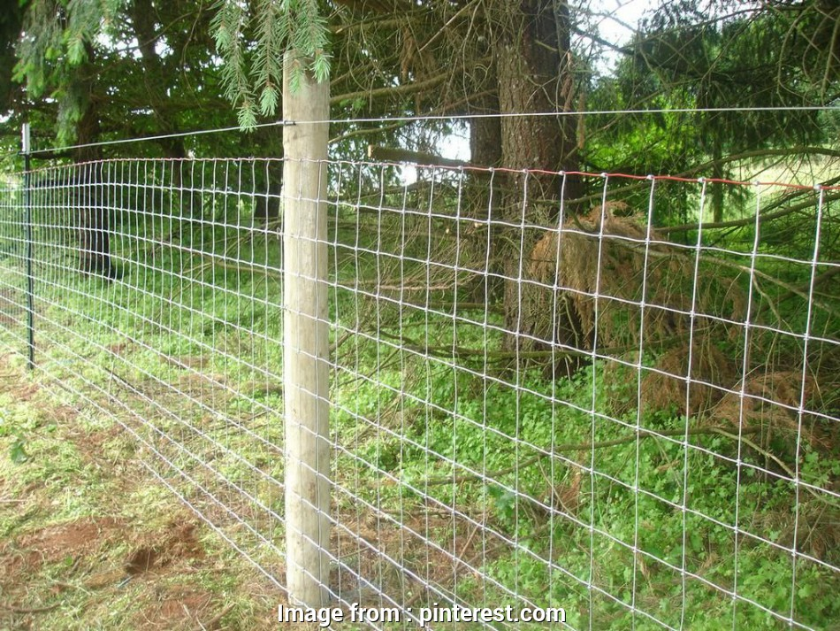 wire mesh goat fence Sheep & Goat Mesh Wire Fence by Statewide Fence,, farm 17 New Wire Mesh Goat Fence Galleries