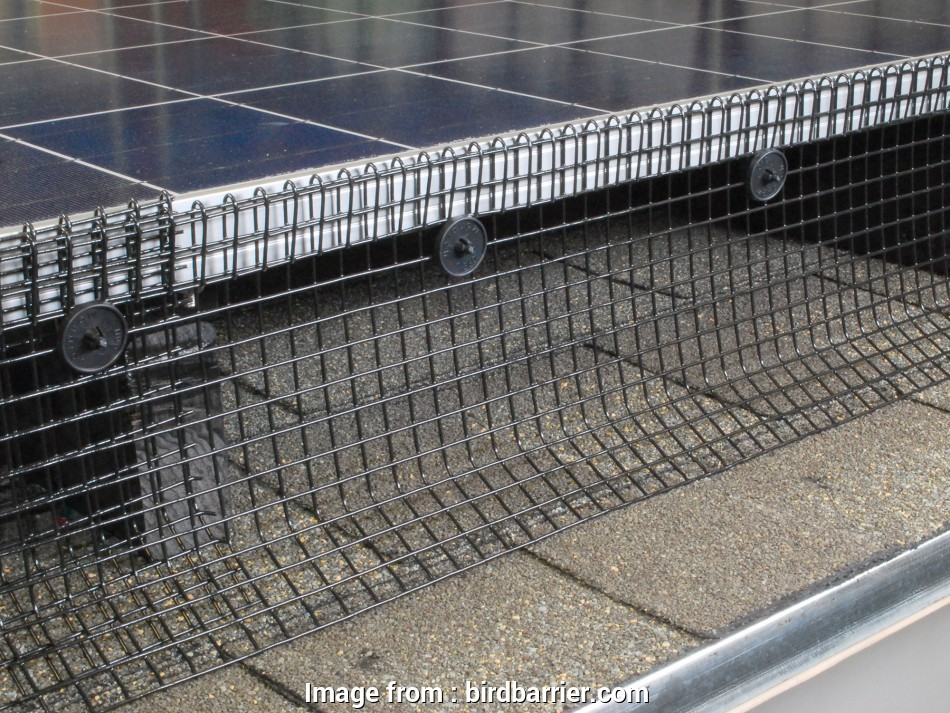 wire mesh panels for bird cages Bird Control, Solar Panels, Bird Barrier 9 Simple Wire Mesh Panels, Bird Cages Galleries