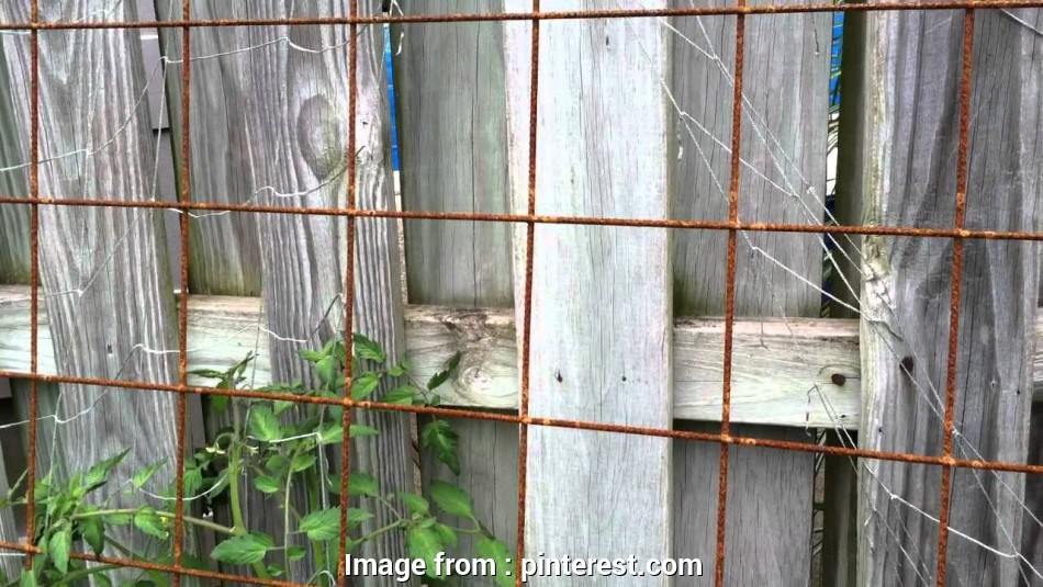 wire mesh trellis panels I bought wire mesh panels to, as trellis panels, my front yard vegetable garden. (Remesh) QUESTION:, there, downsides to… 16 Creative Wire Mesh Trellis Panels Galleries