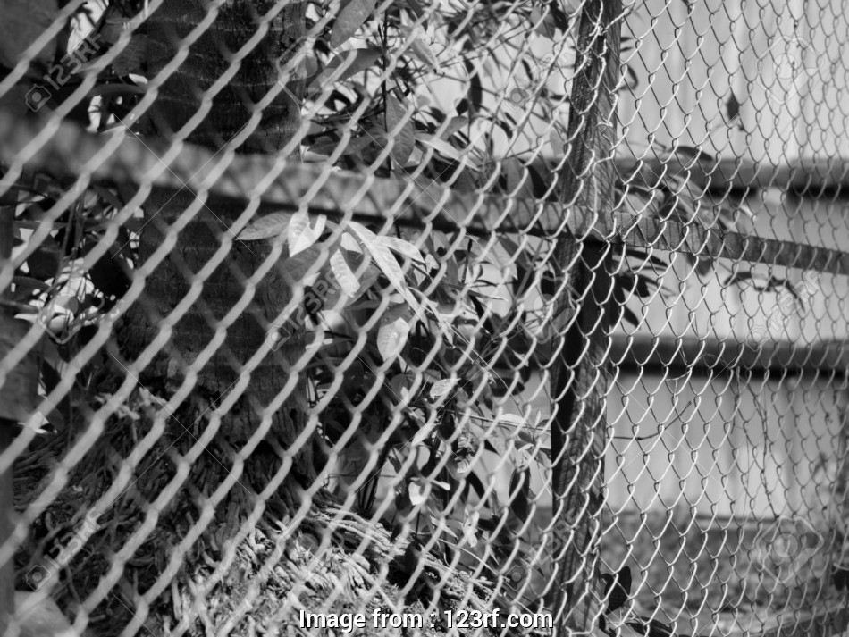 wire netting mesh fence BLACK, WHITE PHOTO OF CHAIN-LINK FENCE (ALSO REFERRED TO AS WIRE NETTING 9 Fantastic Wire Netting Mesh Fence Galleries