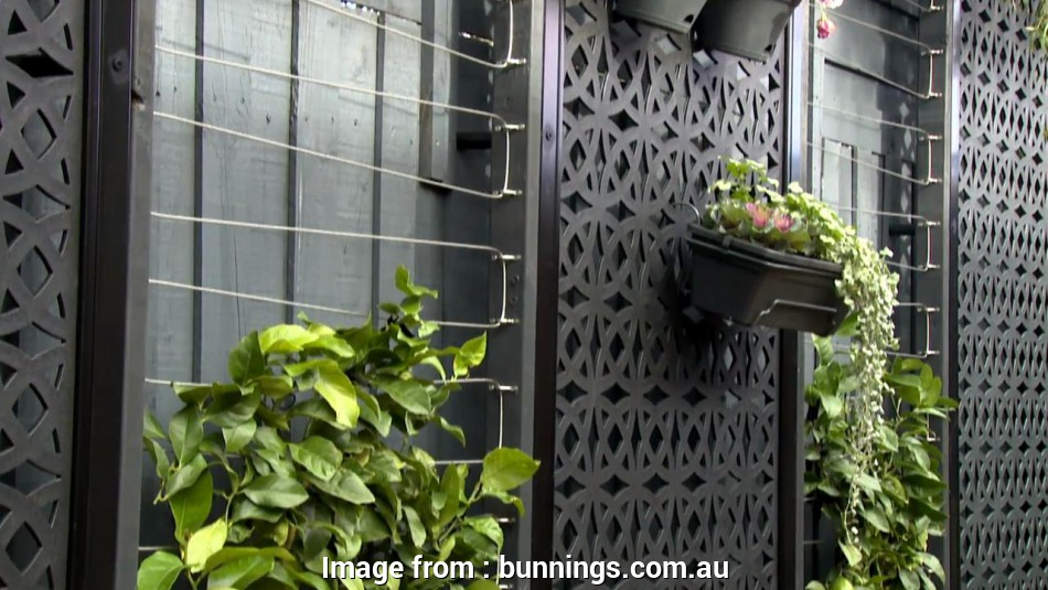 bunnings pvc coated wire mesh How To Make A Wire Espalier Trellis, Bunnings Warehouse Bunnings, Coated Wire Mesh Creative How To Make A Wire Espalier Trellis, Bunnings Warehouse Photos