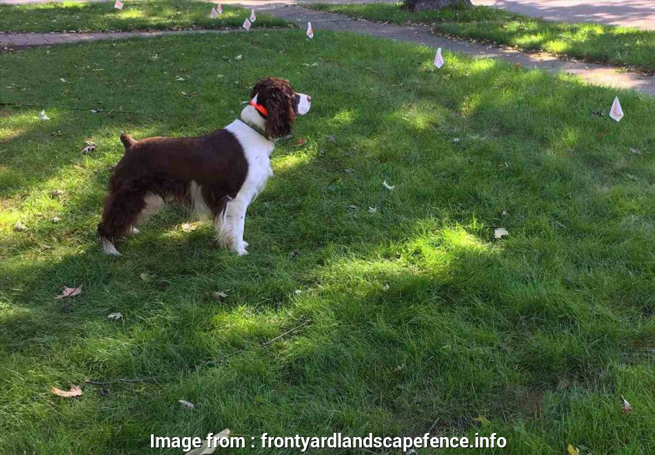 Electric  Fence Wireless Vs Wired Fantastic Dogsrhhowdogcarecom Best Best Invisible  Fence