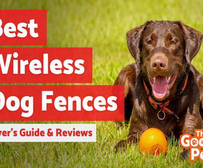 electric dog fence wireless vs wired Best Wireless, Fence Systems (September 2018), Buyer's Guide, Reviews,, Goody Pet Electric, Fence Wireless Vs Wired Practical Best Wireless, Fence Systems (September 2018), Buyer'S Guide, Reviews,, Goody Pet Collections