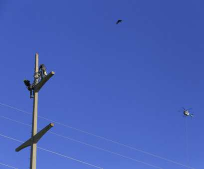 Live Wire Electric Obx Practical Osprey In Outer Banks, New Nesting Platforms, WTKR.Com Collections