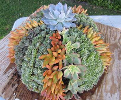 Wire Mesh Baskets, Plants Cleaver Another Green World: Hanging Baskets With Succulents Images