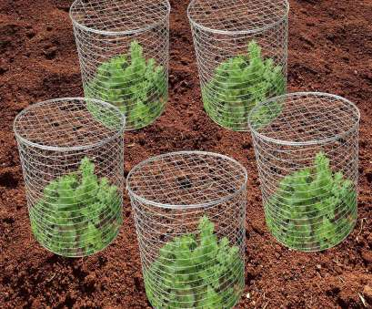 10 Nice Wire Mesh Planting Baskets Solutions