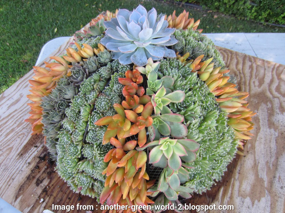 wire mesh baskets for plants Another Green World: Hanging Baskets with Succulents Wire Mesh Baskets, Plants Cleaver Another Green World: Hanging Baskets With Succulents Images