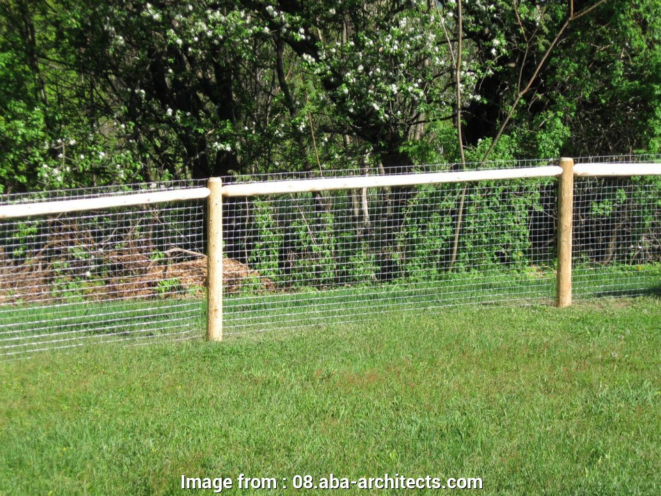 wire mesh fence for dogs Fullsize of Artistic Outside, Wire Fence Dogs Galvanized, Fences Dogs Galvanized, Fences Ken 8 New Wire Mesh Fence, Dogs Galleries
