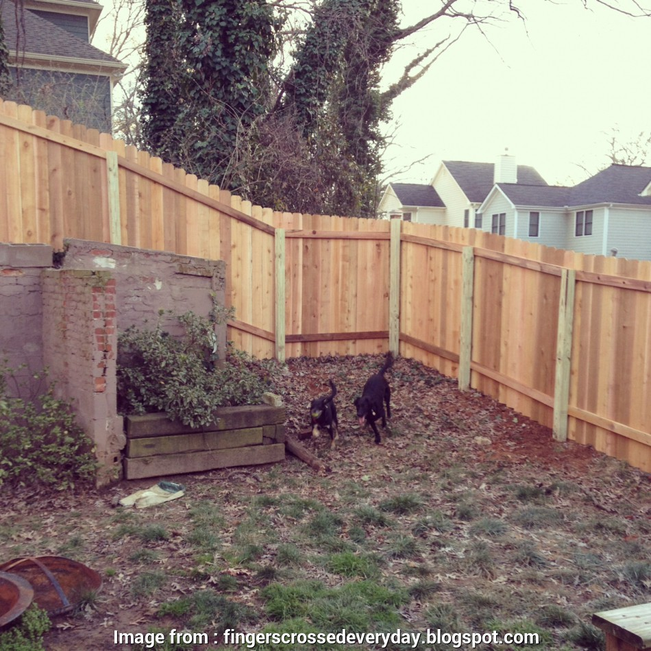 Wire Mesh Fence Menards Cleaver Fingers Crossed   Fencing In  Backyard Pictures