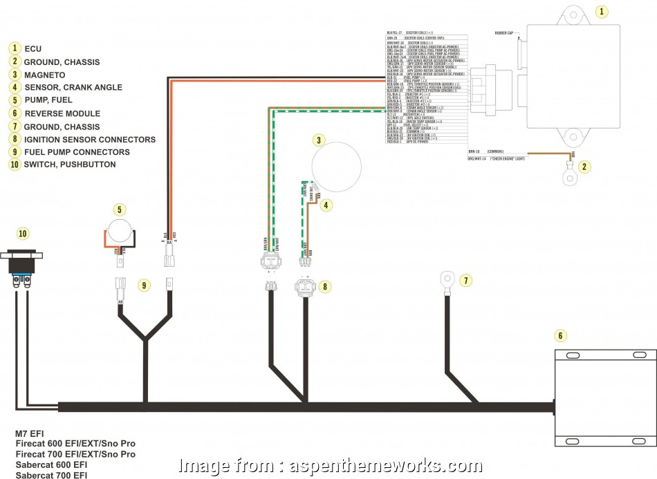 Wiring A Light, Switch Best Wiring Diagram, Single Pole ...